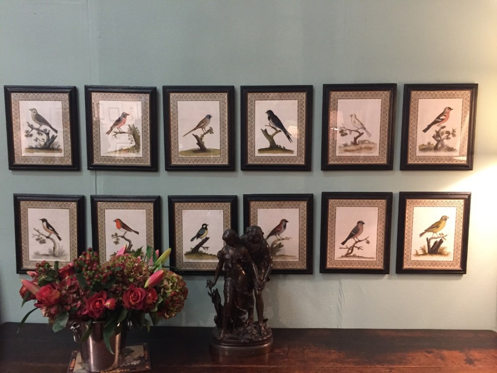 rare and fine set of 12 eliza albin bird lithographs