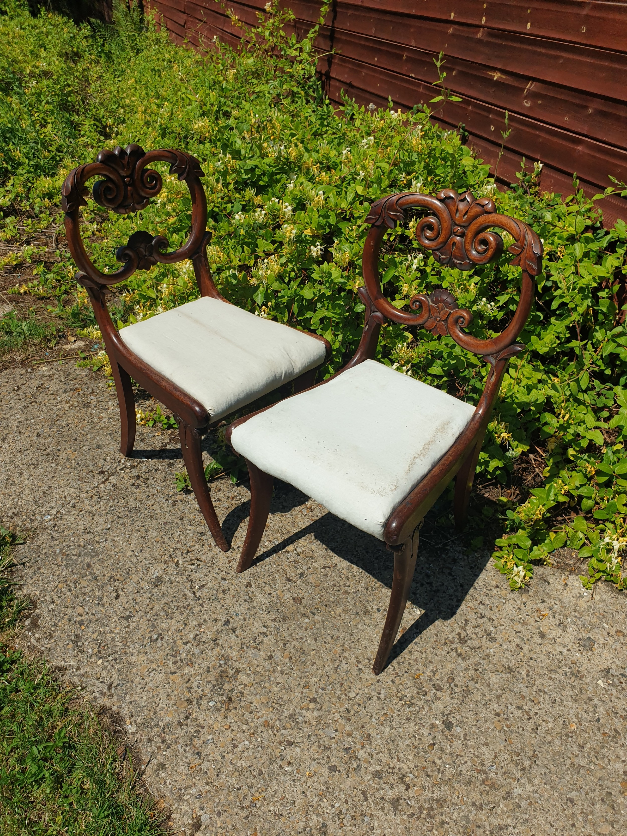 pair of william the fourth mahogany hall chairs