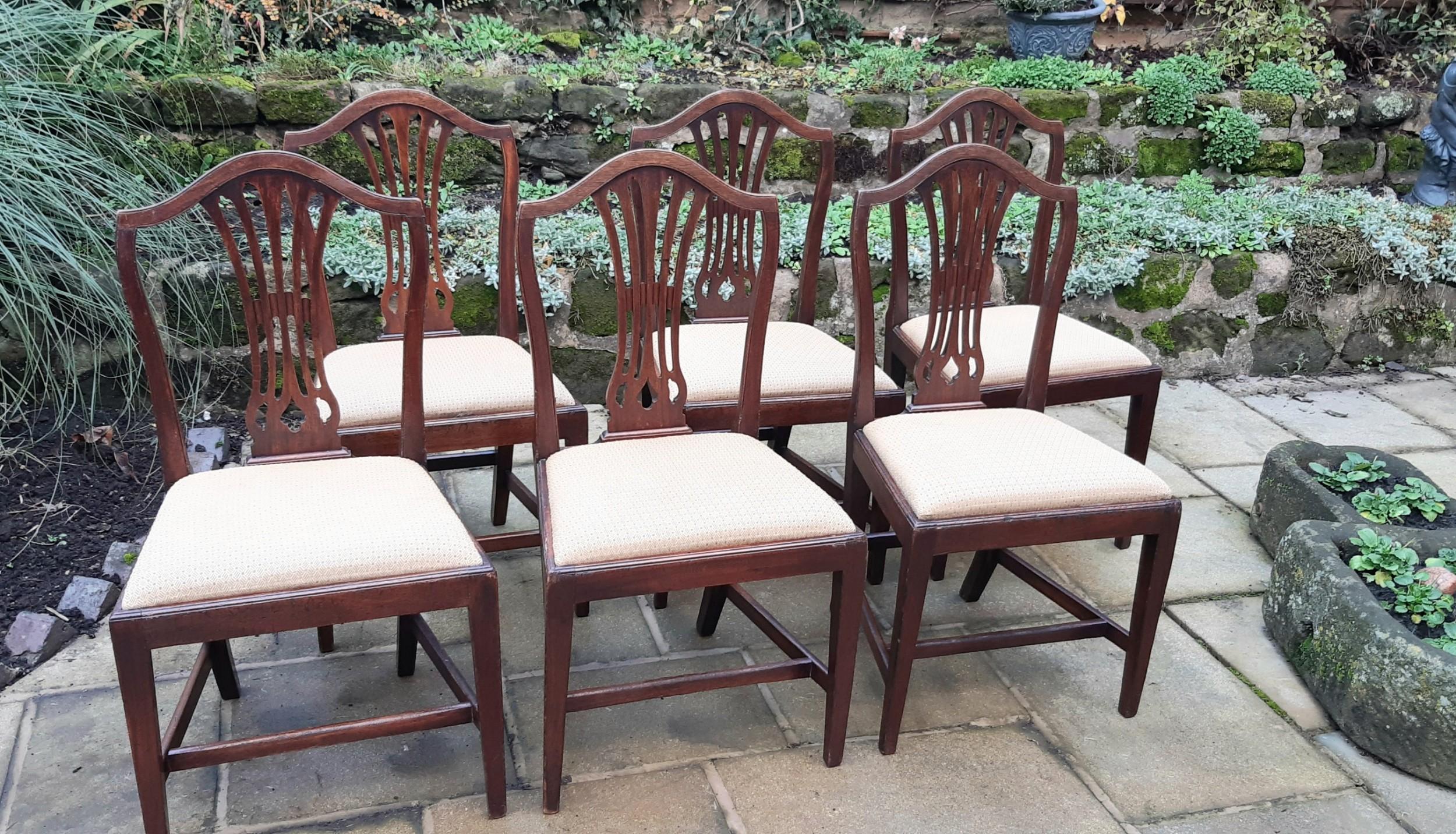 six georgian hepplewhite mahogany dining chairs