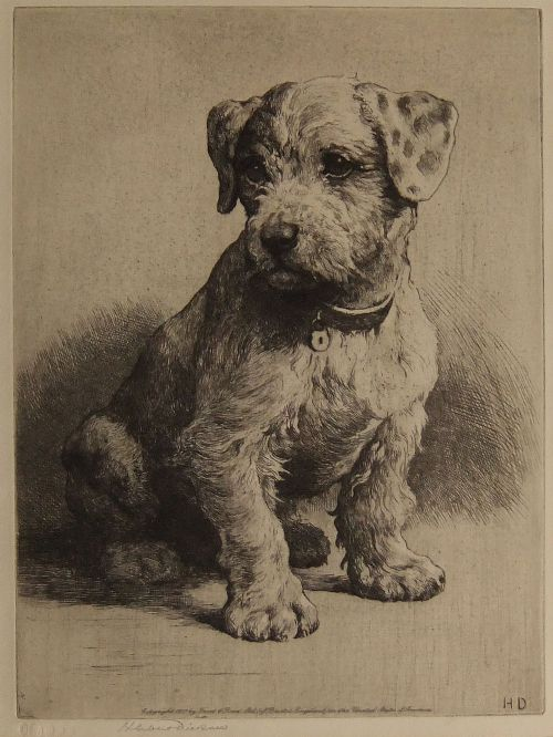 Herbert Dicksee A Sealyham Pup Original Signed Etching