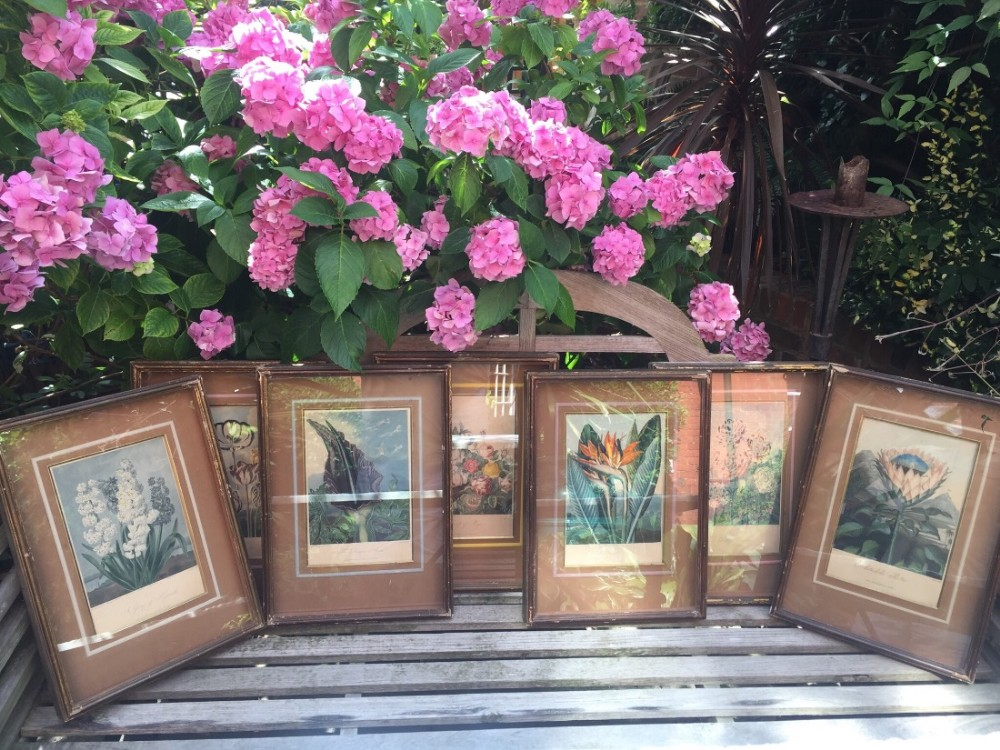 highly decorative group of 7 early c19th coloured botanical engravings in deep 'shadowbox' frames