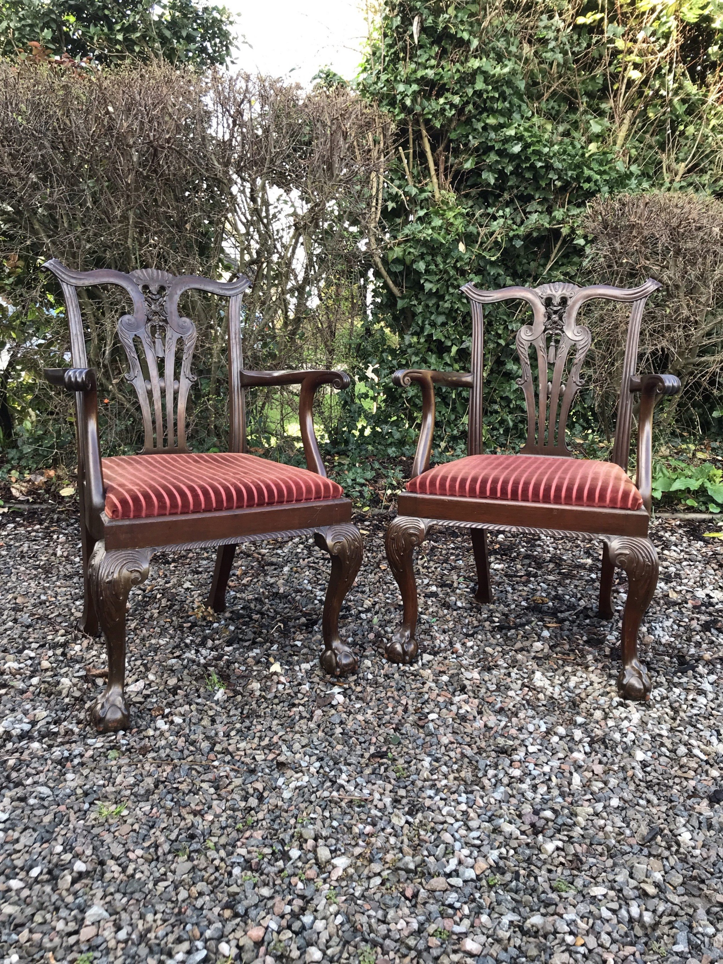 pair chippendale style ball and claw carver armchairs circa 1920