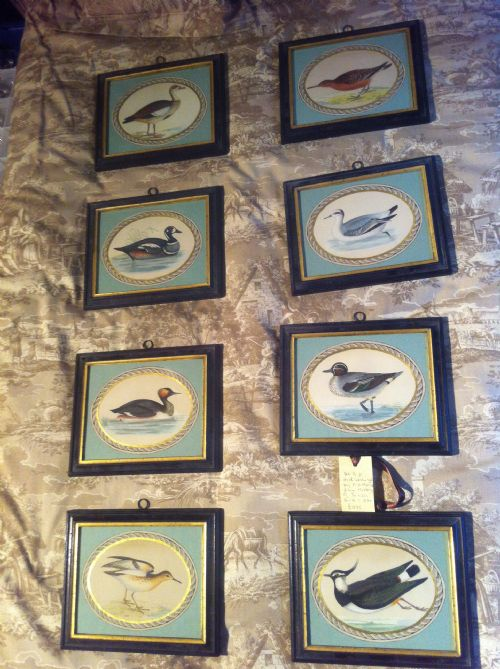 set of 8 hand coloured water fowl by rev b morris c1840