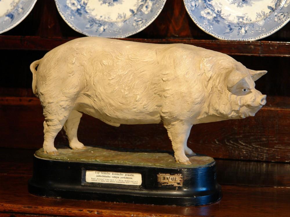 pottery model of yorkshire boar pig