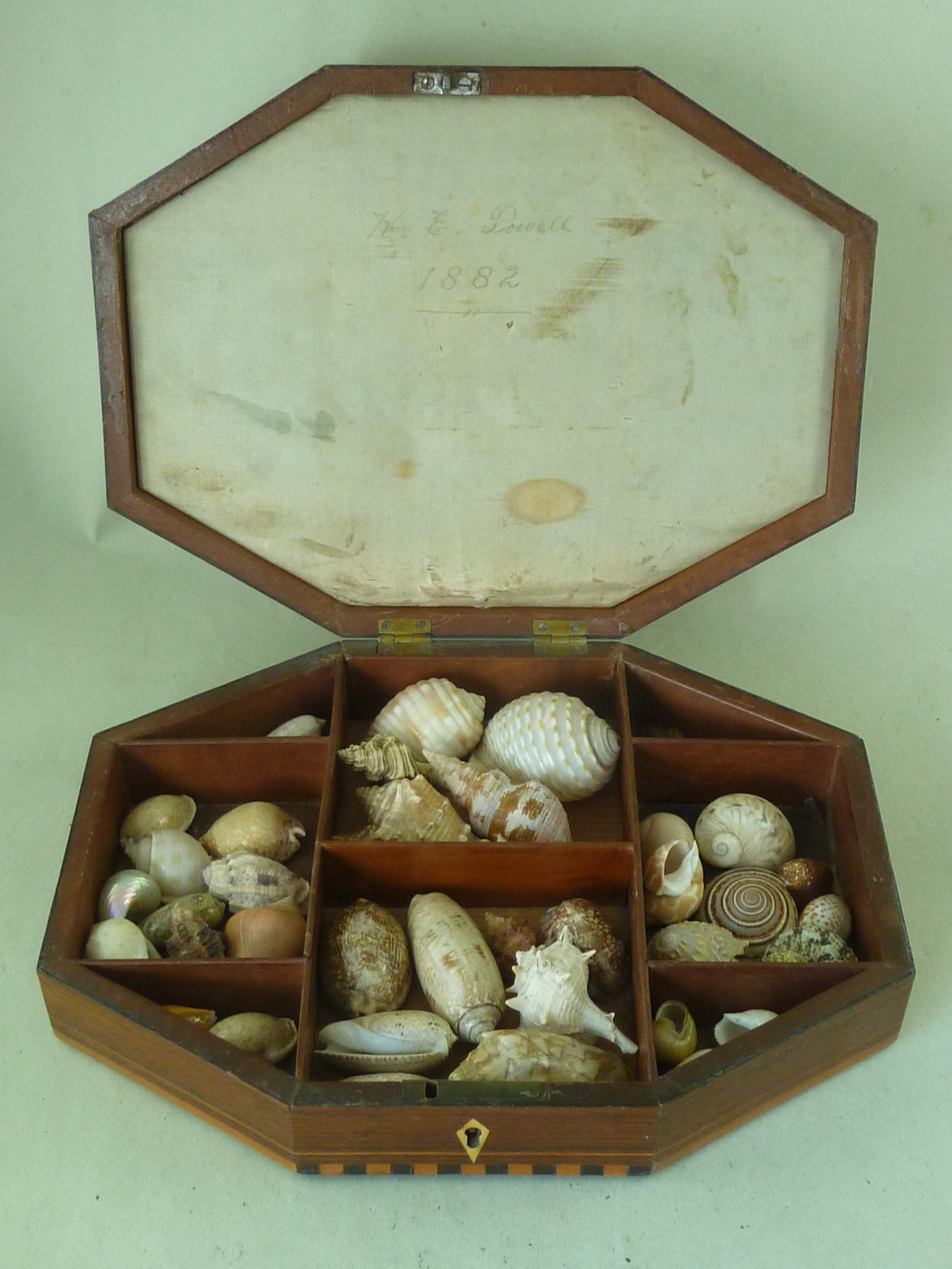 regency sea shell display box valentine inlaid rosewood antique