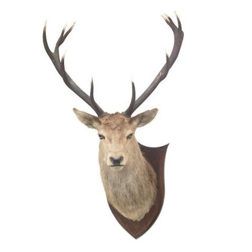 taxidermy mounted stags head
