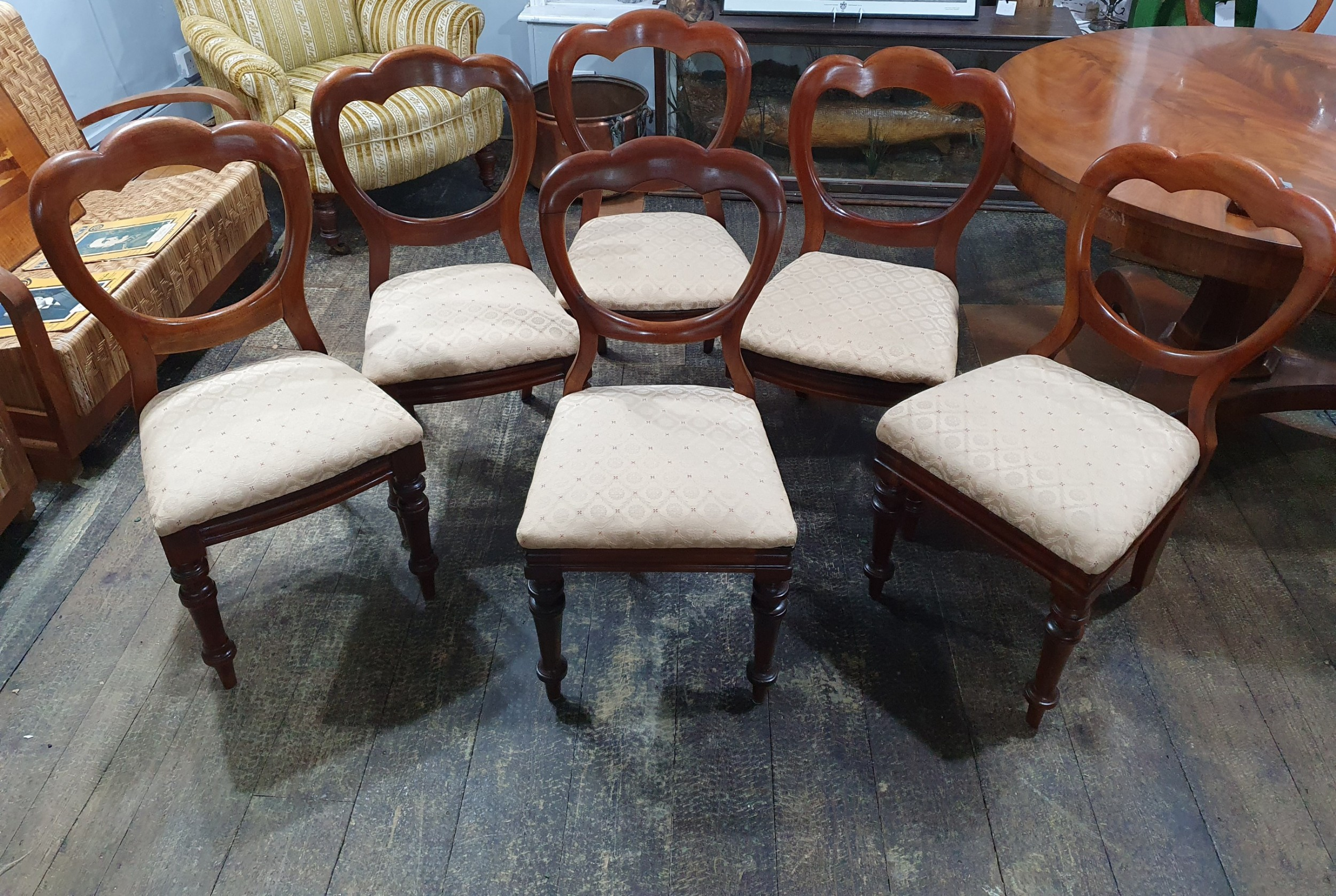 set of six victorian balloon back walnut chairs c18601880
