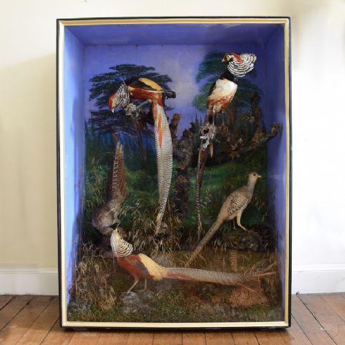 taxidermy golden pheasants
