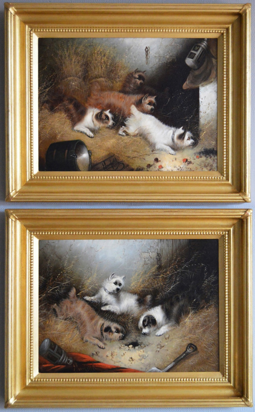pair of oil paintings with terriers ratting in a barn by edward armfield