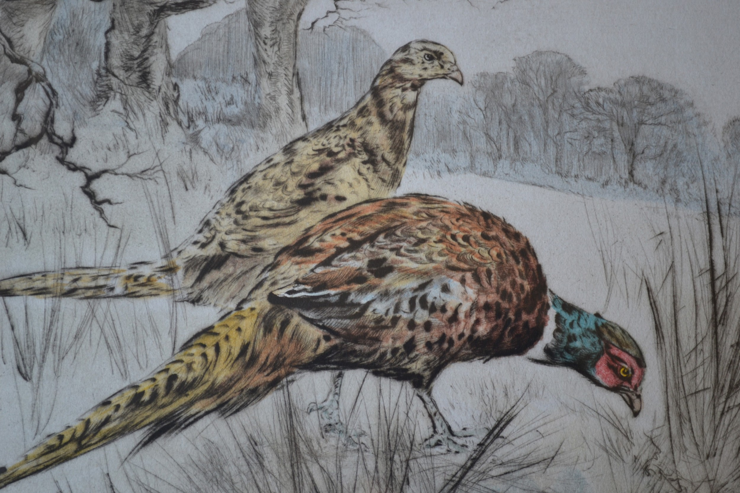 henry wilkinson 19212011 dry point coloured etching c 1950 pheasants no 95100