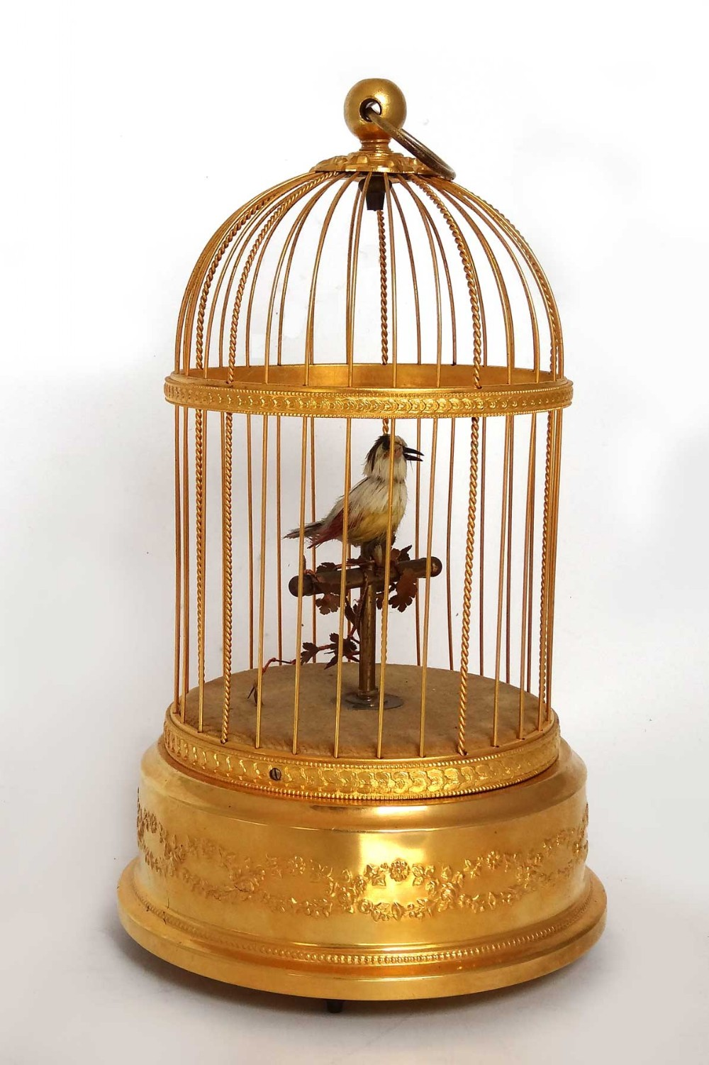 parrot in a cage 1 the right size cage with the right bar spacing and non toxic paint or a stainless steel cage 2 cage placement this is very important the cage should be placed.
