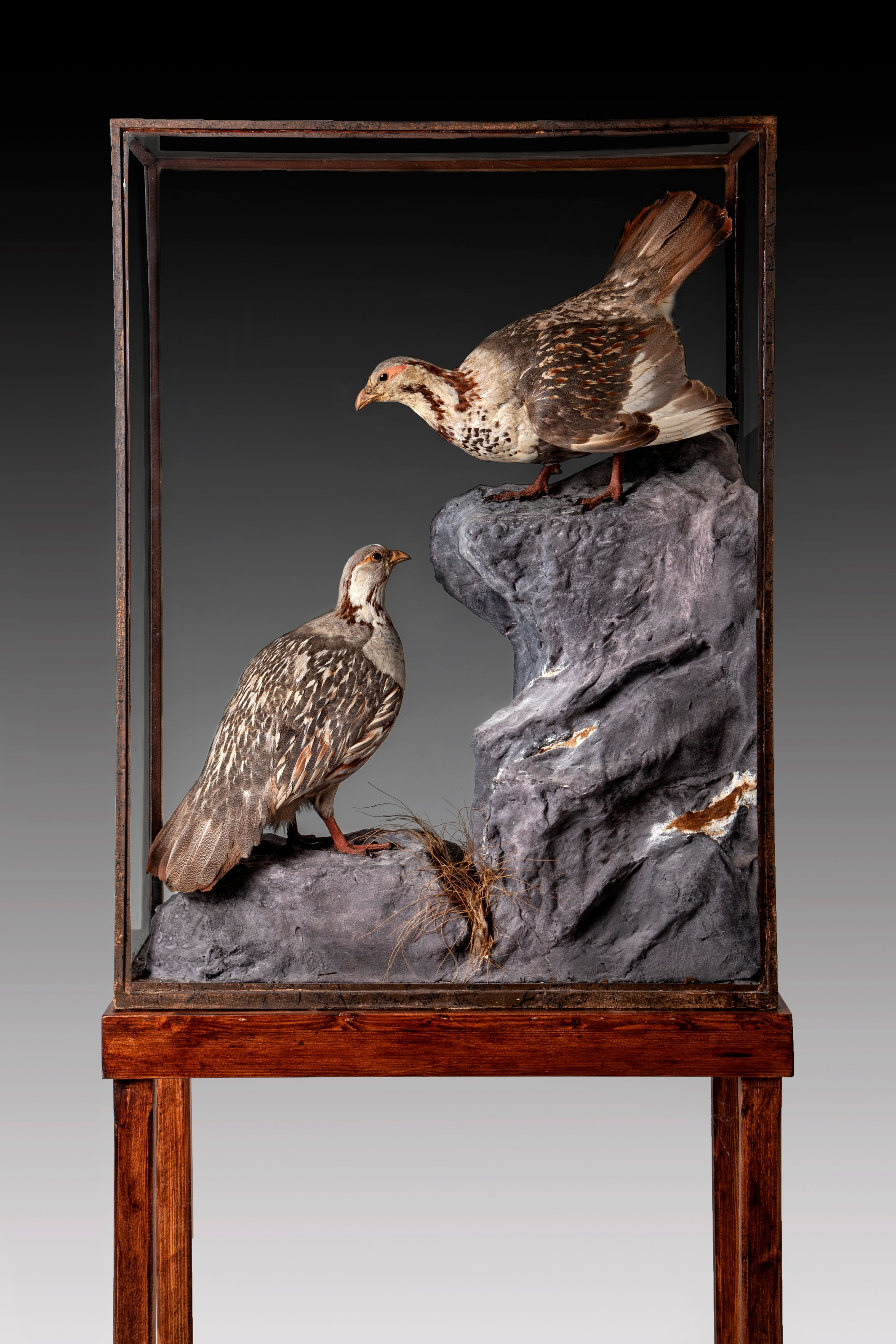 a rare pair of taxidermy cabinets of snow cocks by roland ward