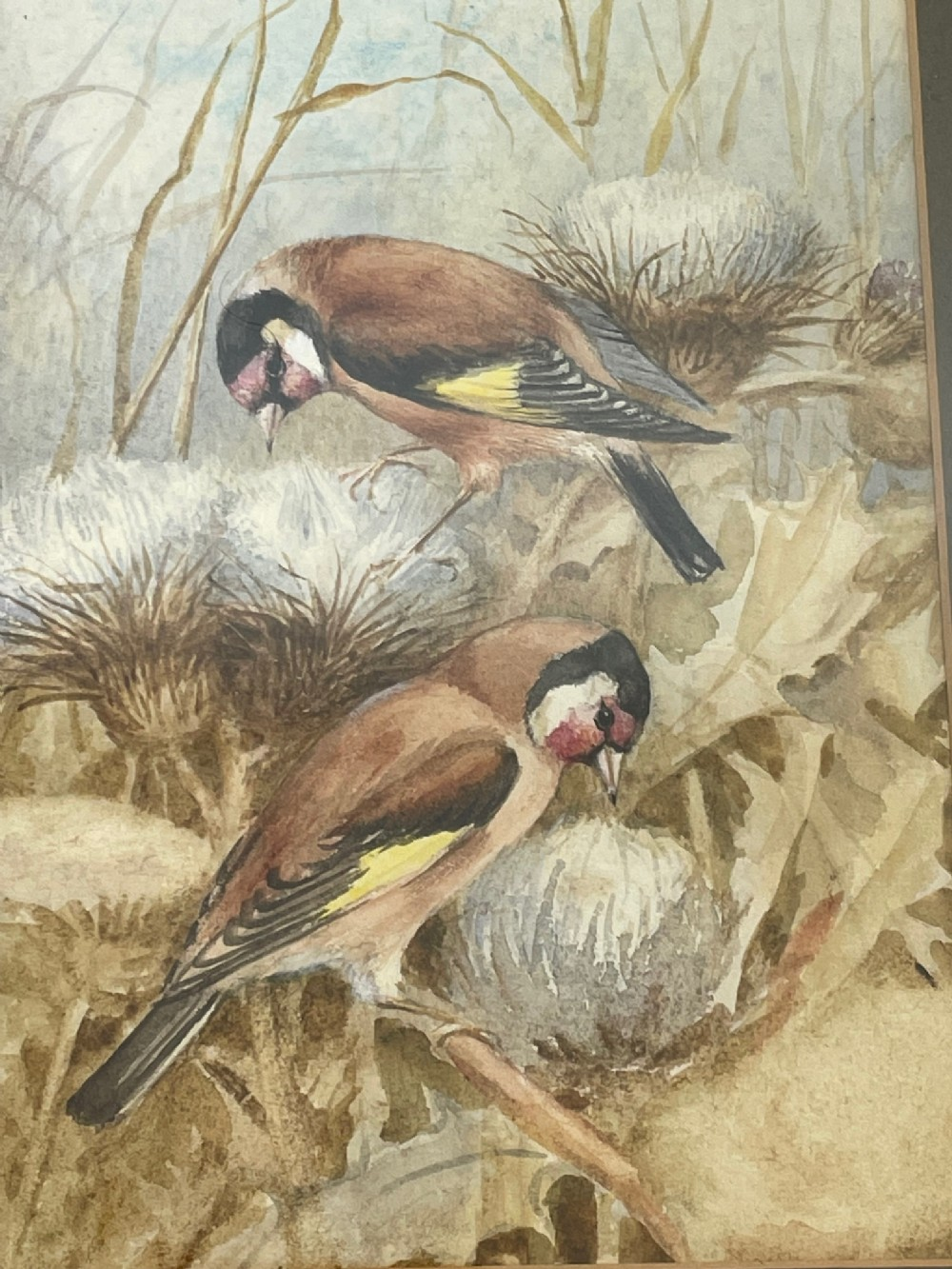 ornithological watercolour finches birds study by florence barlow