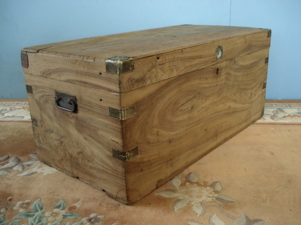 large solid camphorwood trunk