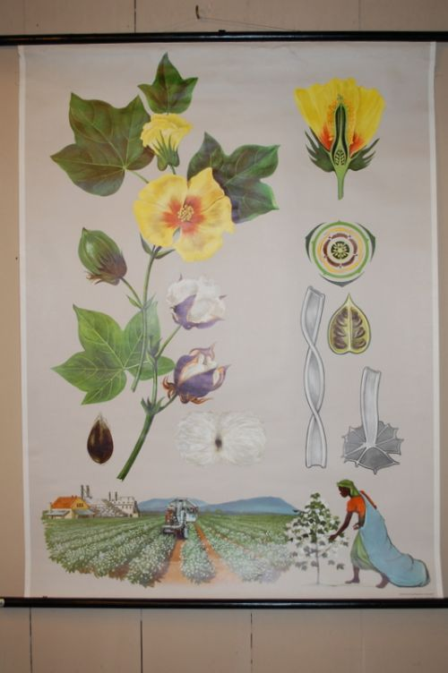 antique vintage teaching chart pull down school poster