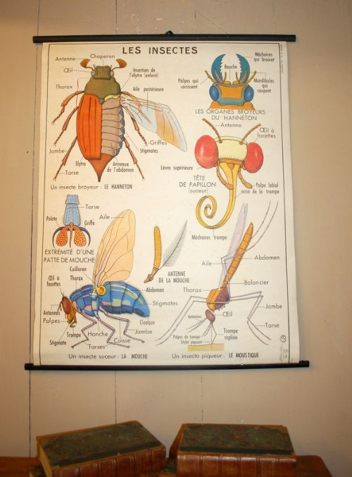 vintage french double sided pull down school teaching chart 1960