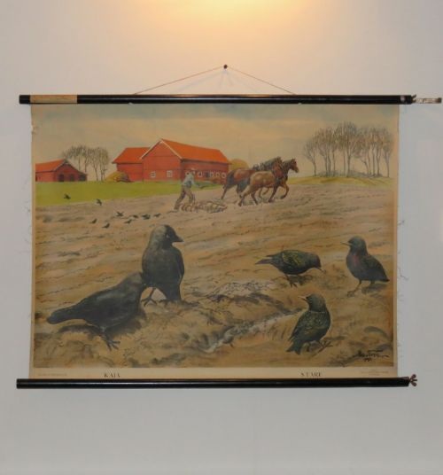 original vintage swedish canvas pull down teaching school poster rural scene with birds