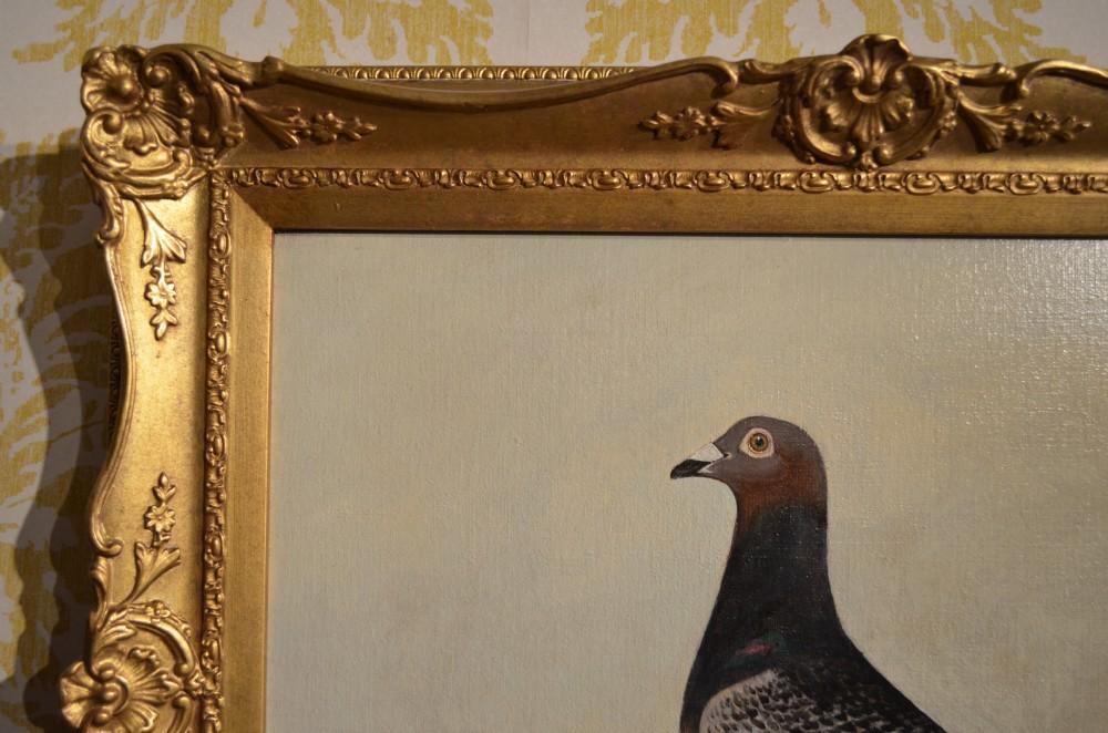 Oil Portrait Of A Racing Pigeon | 343539 | Sellingantiques co uk