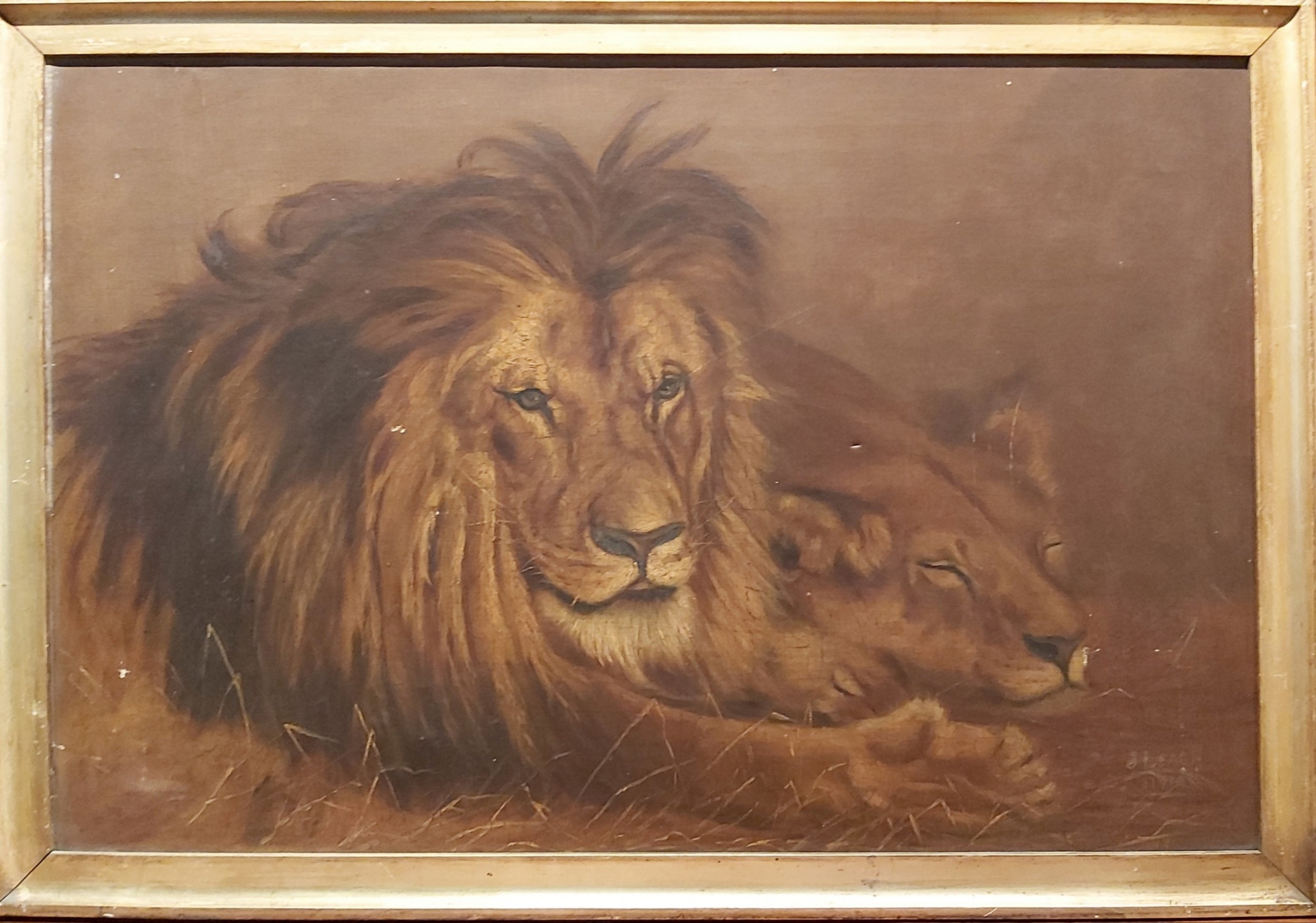 early 20th century study of a resting lion and lioness signed j leach