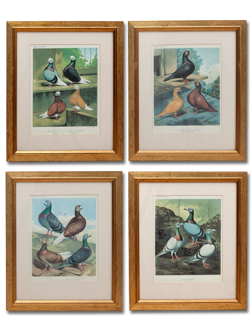 set of four framed cassels prints of pigeons