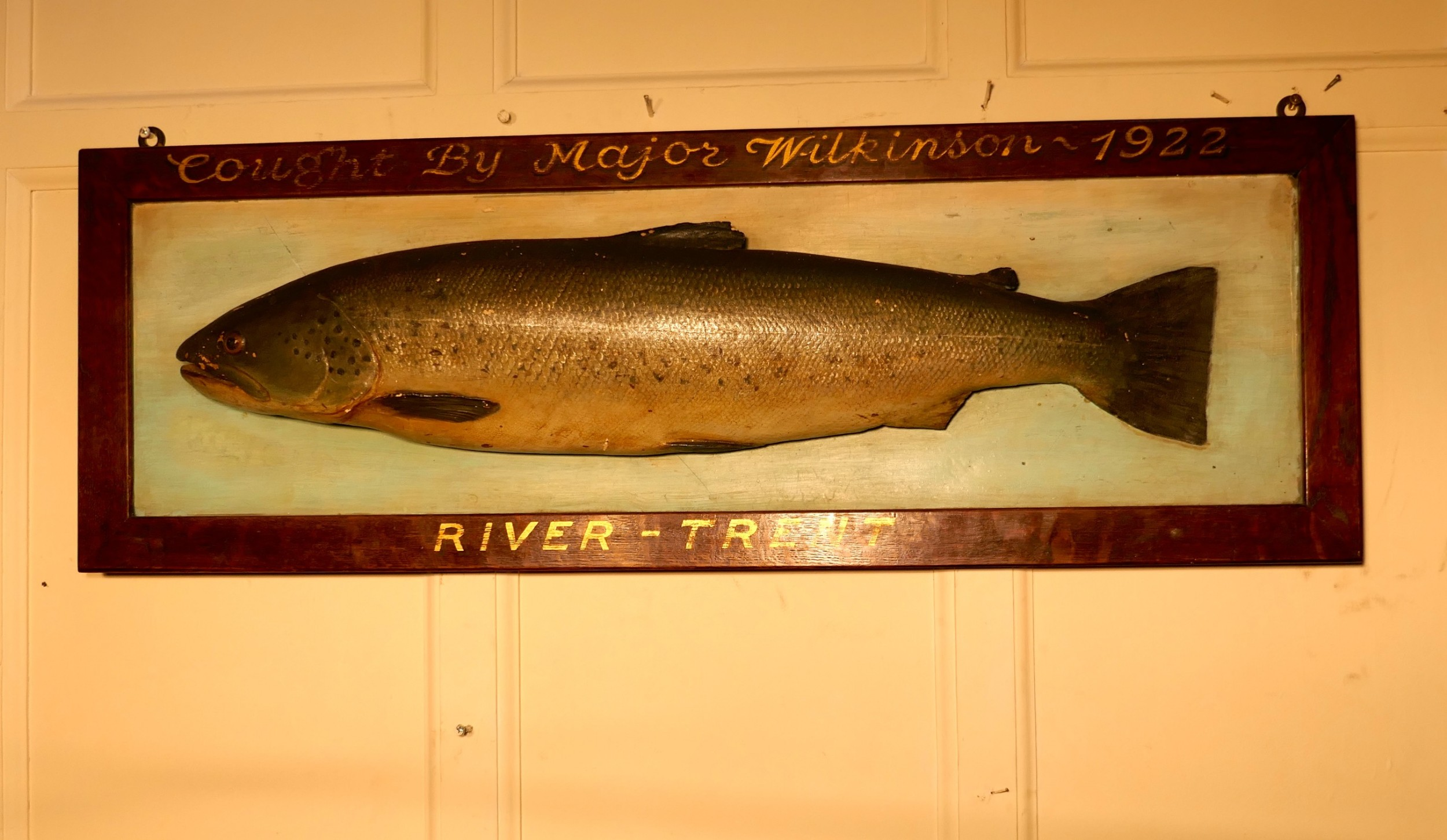 mounted taxidermy of a trout from the river trent 1922
