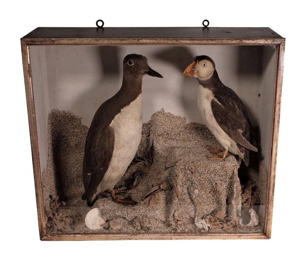 cased taxidermy birds