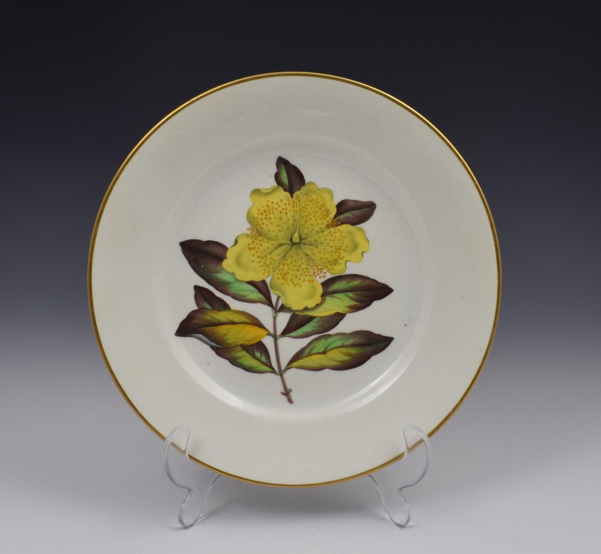 derby porcelain botanical dessert plate c1806 curtis st john's wort