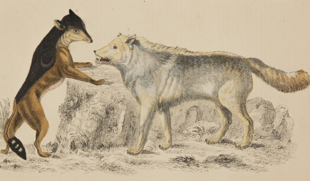 dramatic 'grinning wolf' lithograph goldsmith 1875