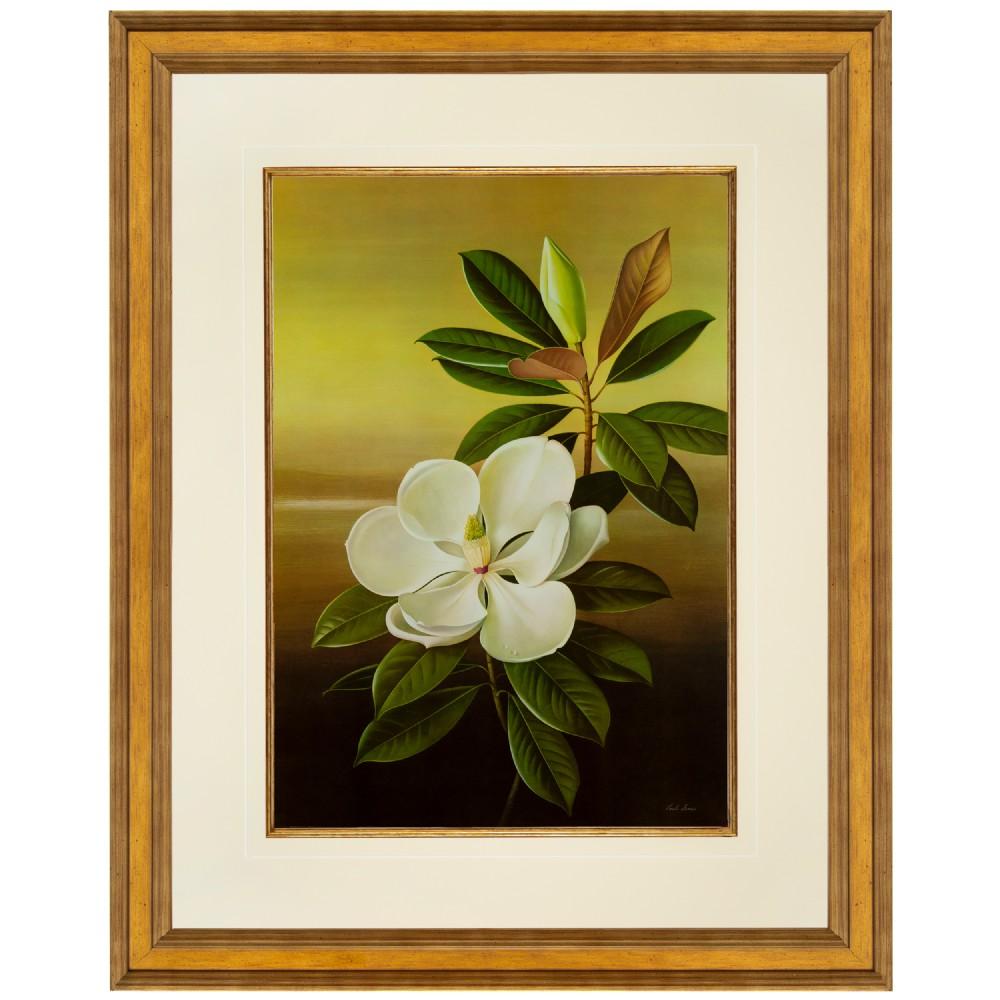 magnolia grandiflora large format fine art lithograph paul jones 1959