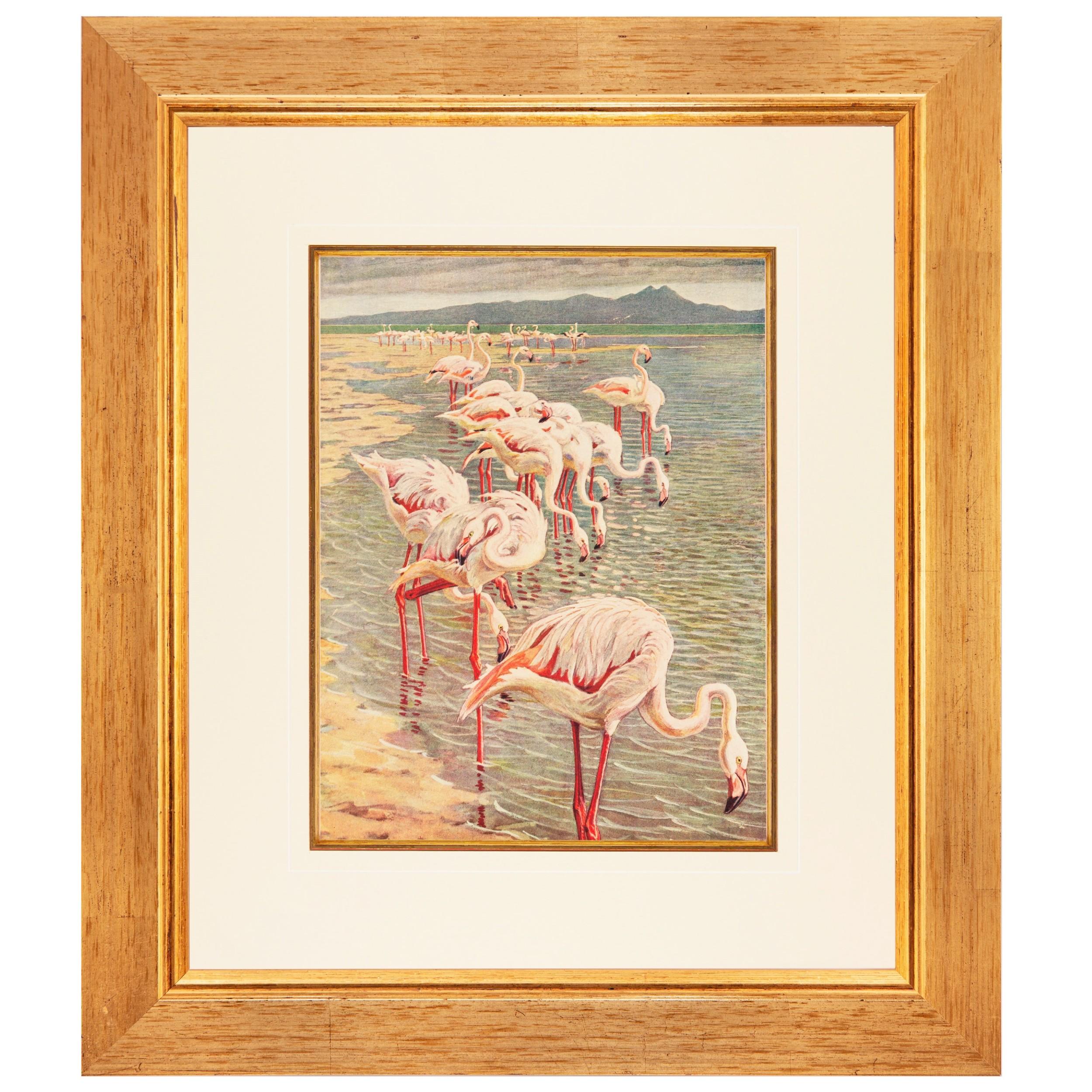 flamboyance of flamingos fine chromolithograph 1887