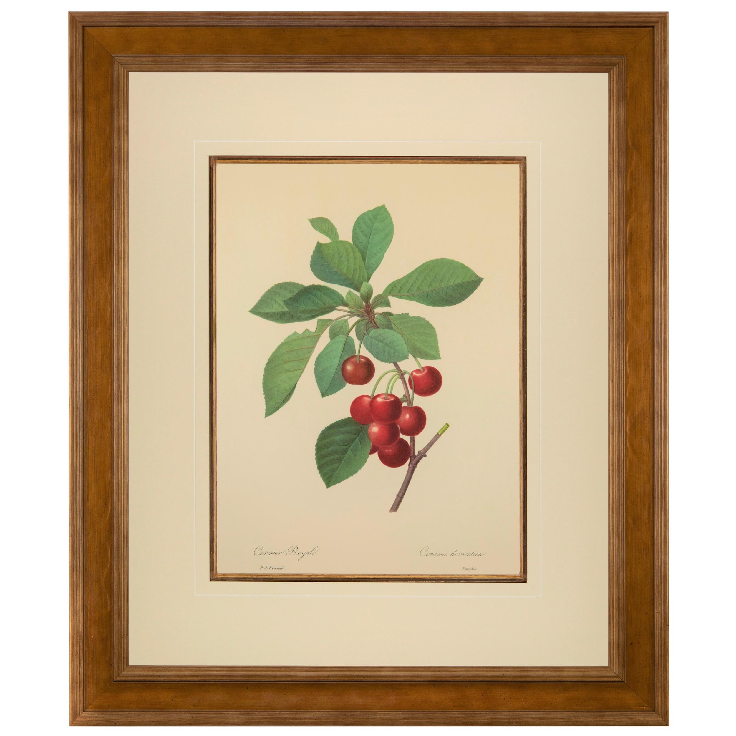 royal cherries lithograph pierre joseph redoute 1954