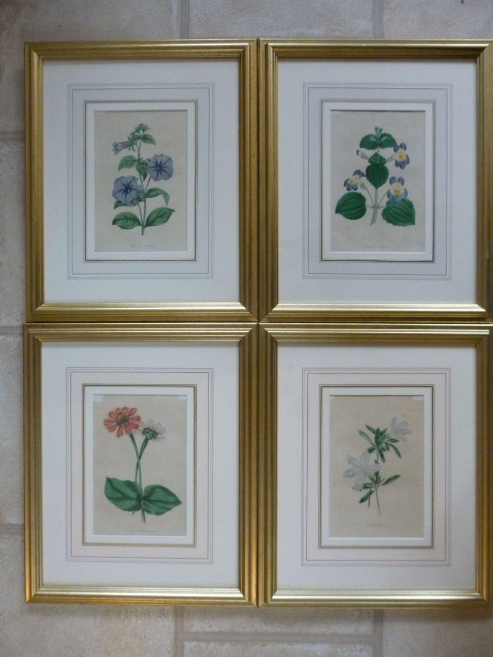 set of paxton botanical coloured etchings