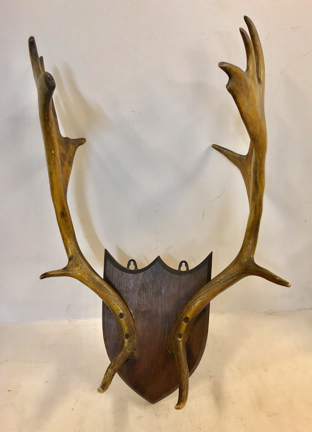 c19th shield mounted deer stag antlers
