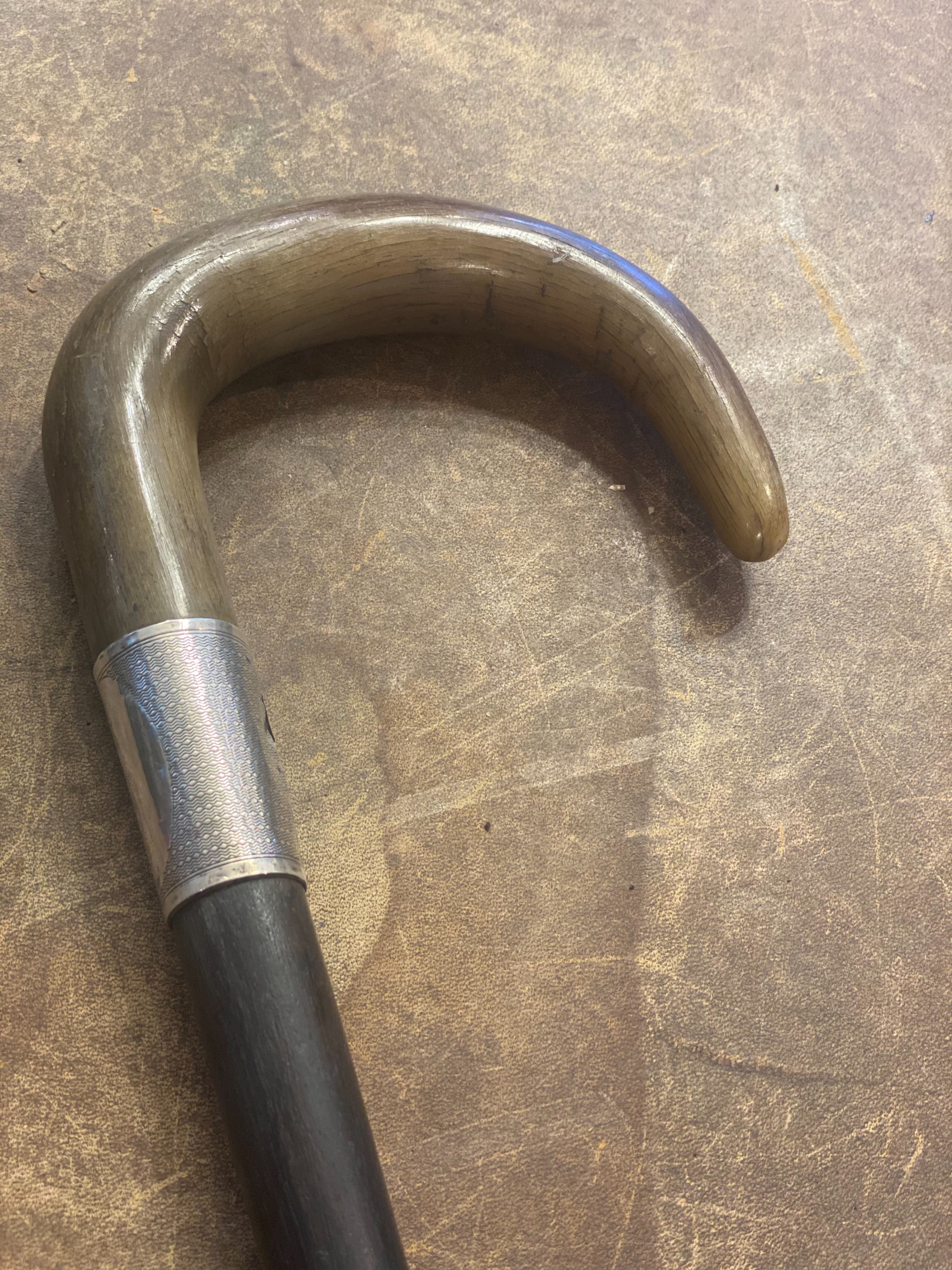 edwardian horn topped silver collared walking stick