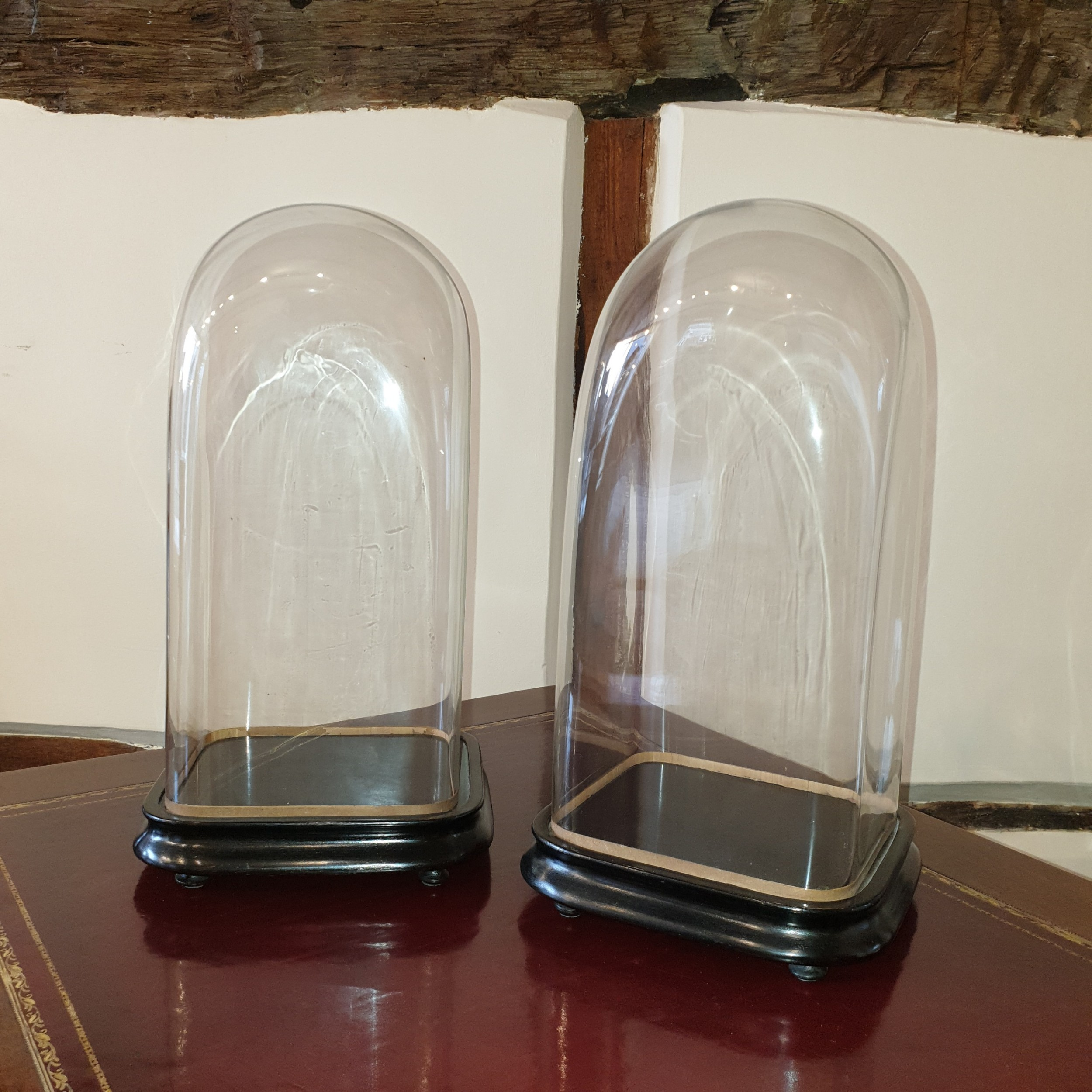 pair of 19th century glass domes with ebonised bases