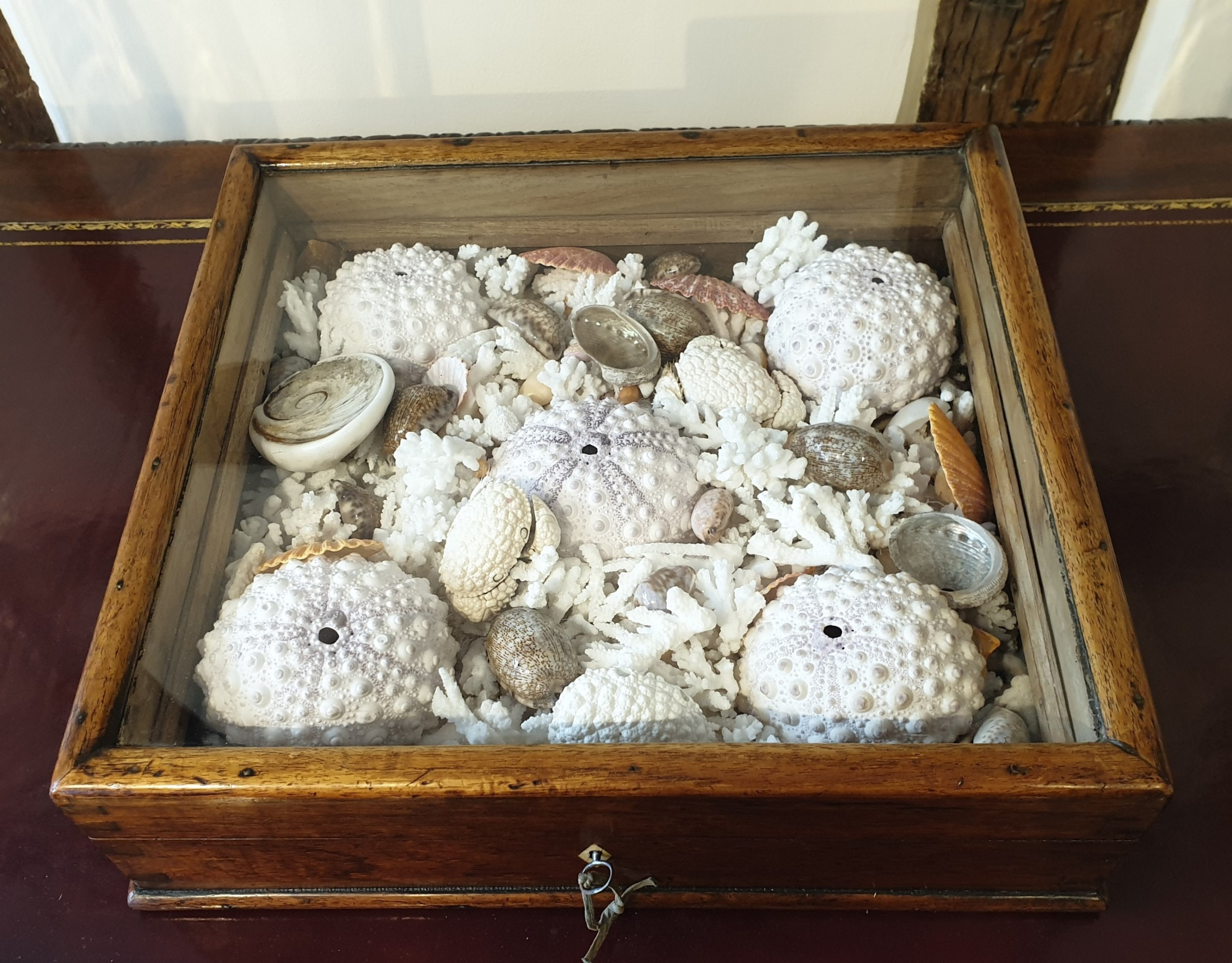 a collection of shells and crustacean in its original 19th century glazed top case