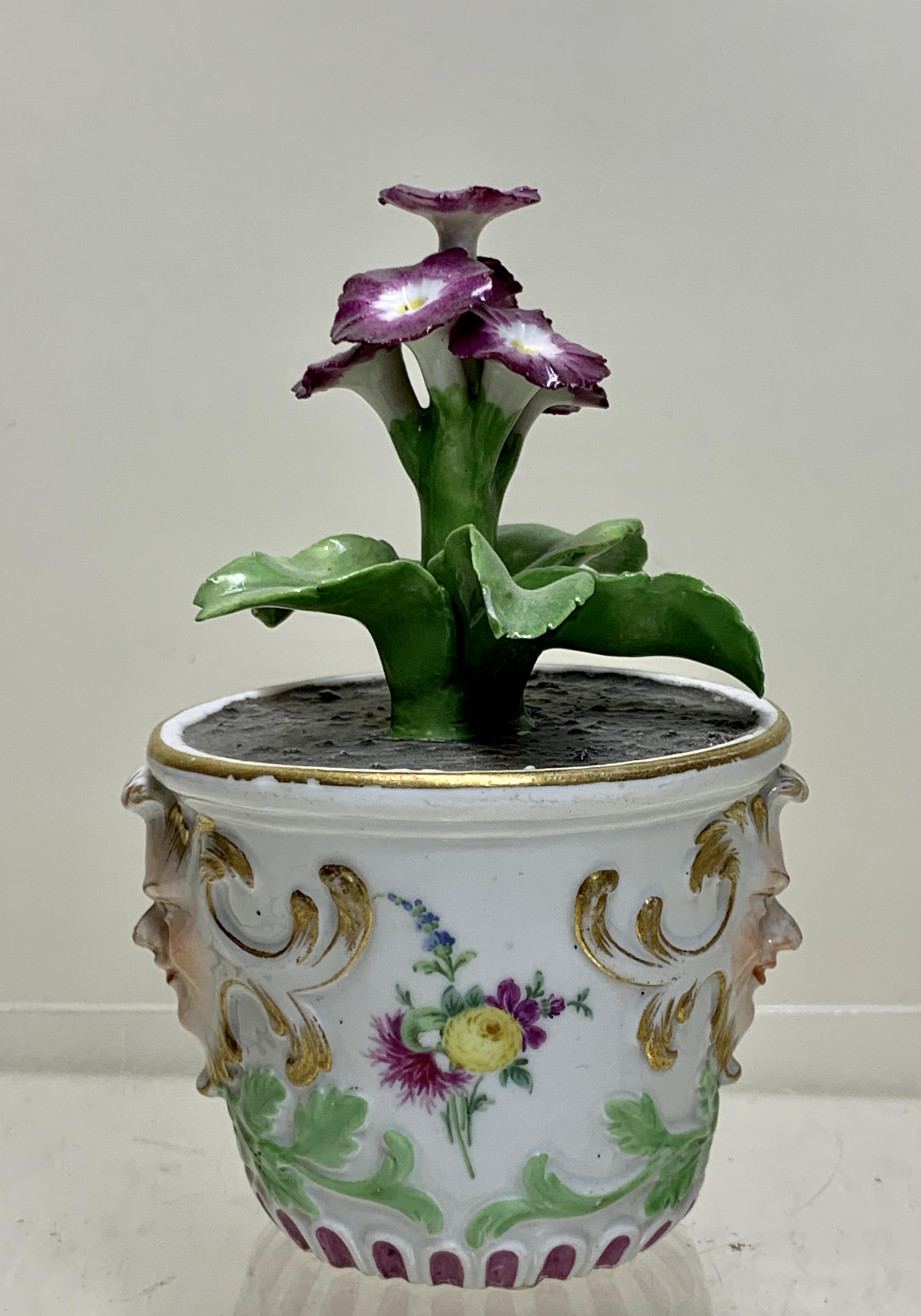 rare meissen marcolini flower plant in a tub circa 1780 porcelain