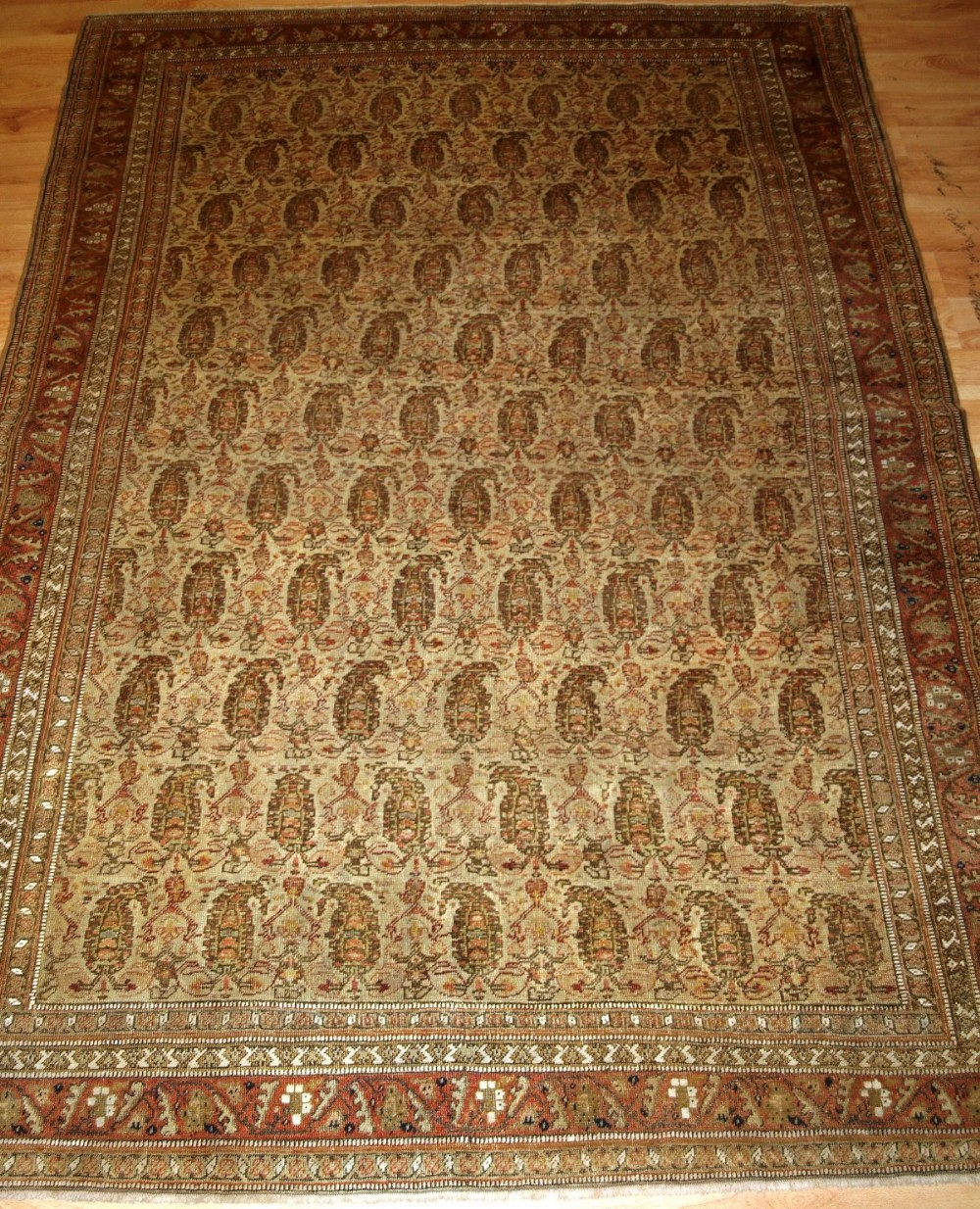 antique senneh rug ivory ground with boteh very fine circa 1900