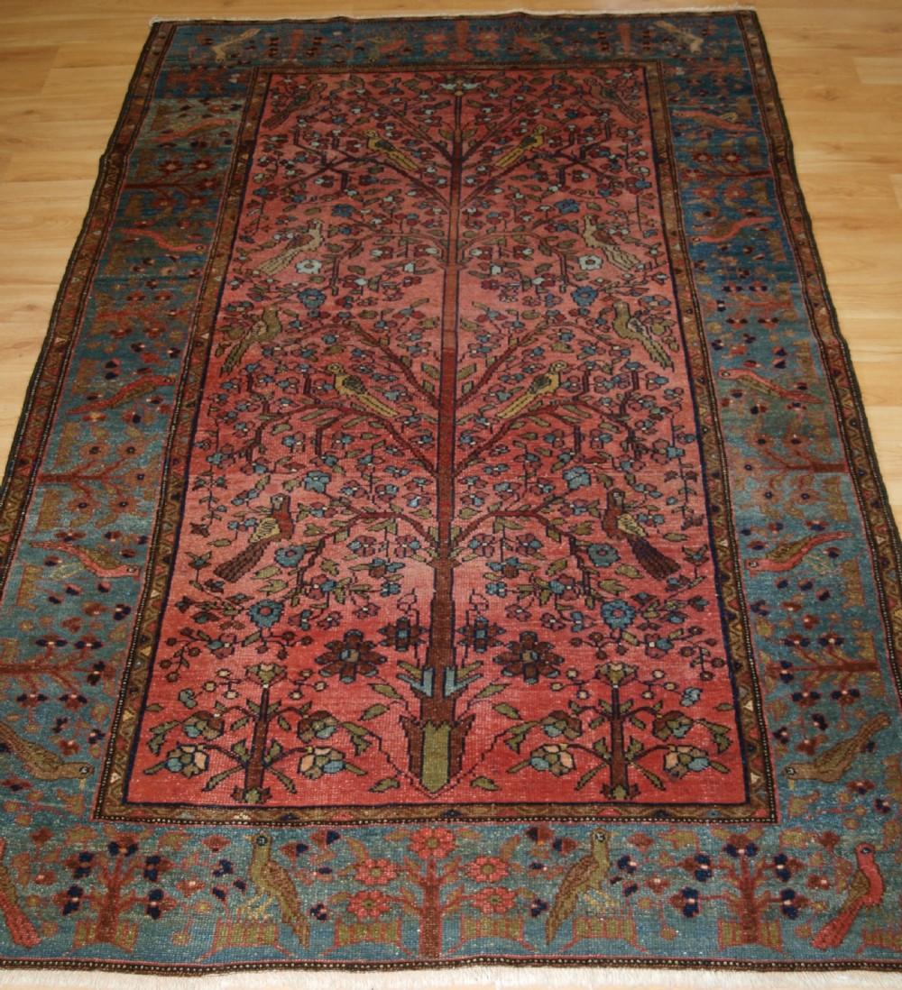 old north west persian hamadan rug paradise garden design tree with birds circa 1920