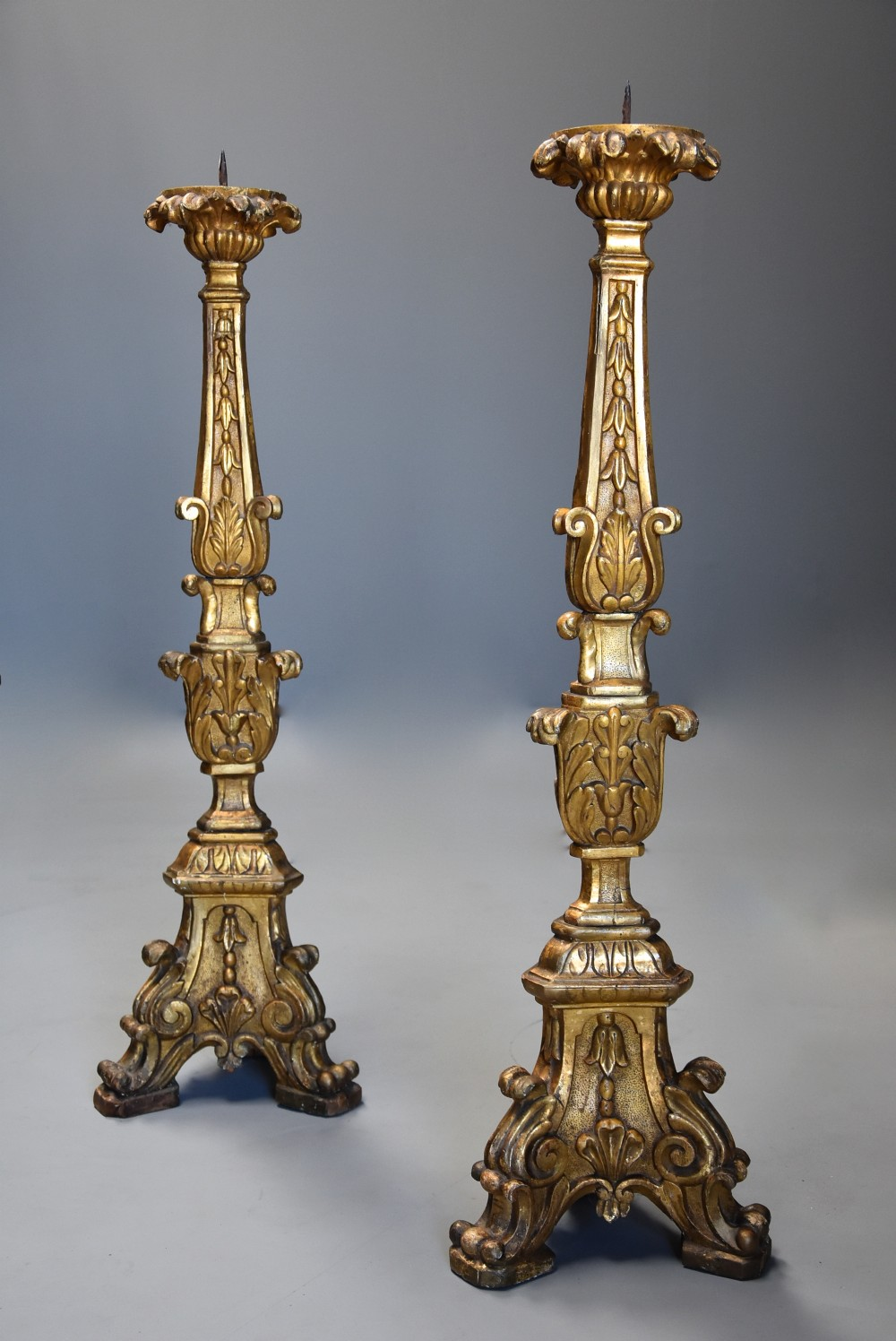 pair of large 18th century italian rococo carved giltwood pricket candlesticks