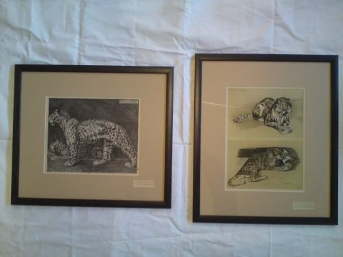 folio prints by mathurin meheut