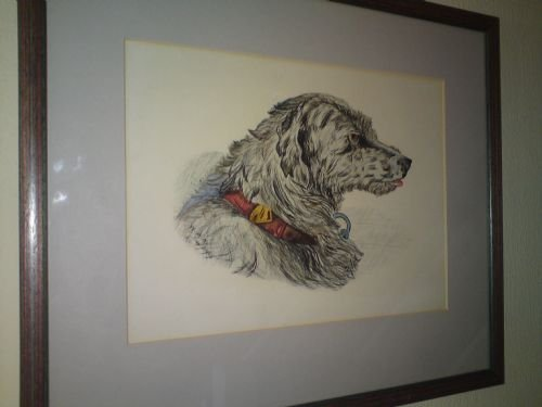 drawing of a hound