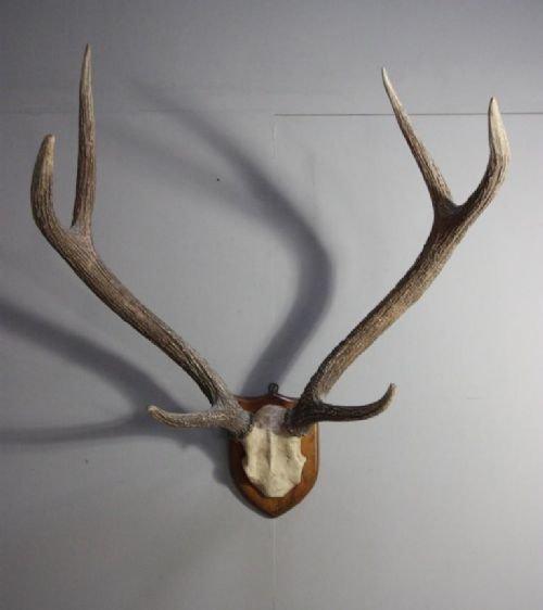 Set Of Antique Victorian Samba Deer Antlers 128641