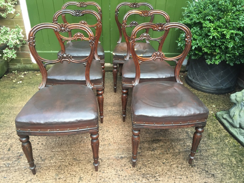set of 6 c19th william iv period carved rosewood dining chairs