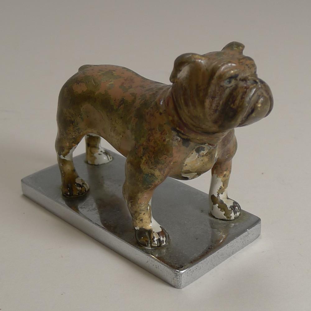 antique vienna cold painted bronze boxer dog c1900 car mascot