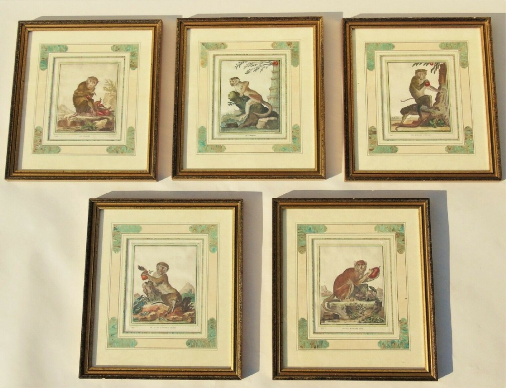 set of five french hand coloured engravings of monkeys