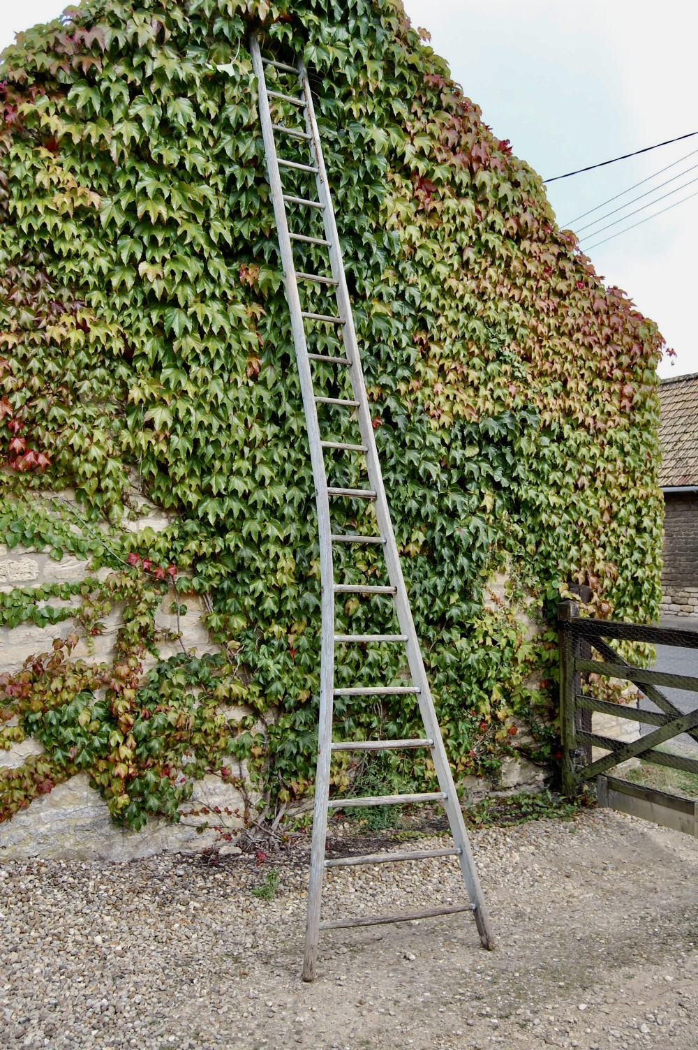 late 19th century kent cherry orchard ladder