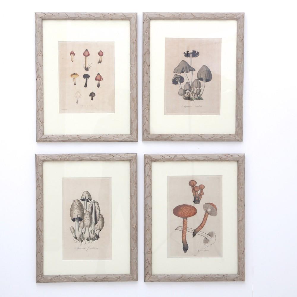 hand coloured engravings of fungi