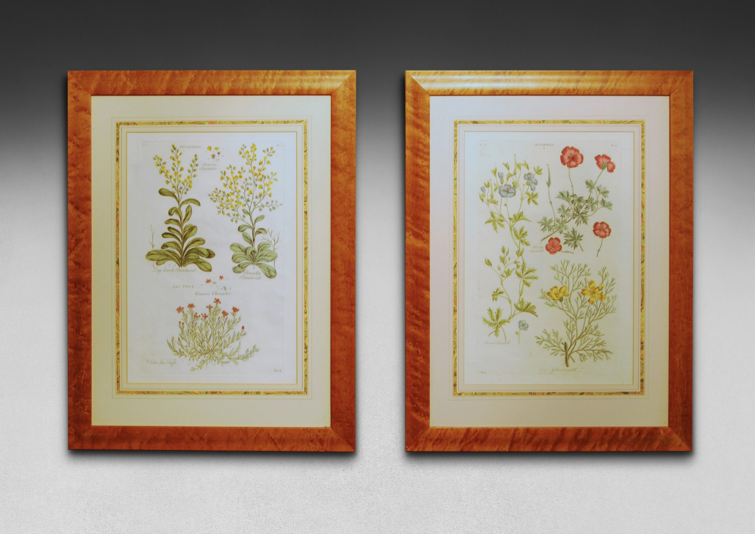 a pair of hand coloured copper plate engravings by john hill from eden or a compleat body of gardening