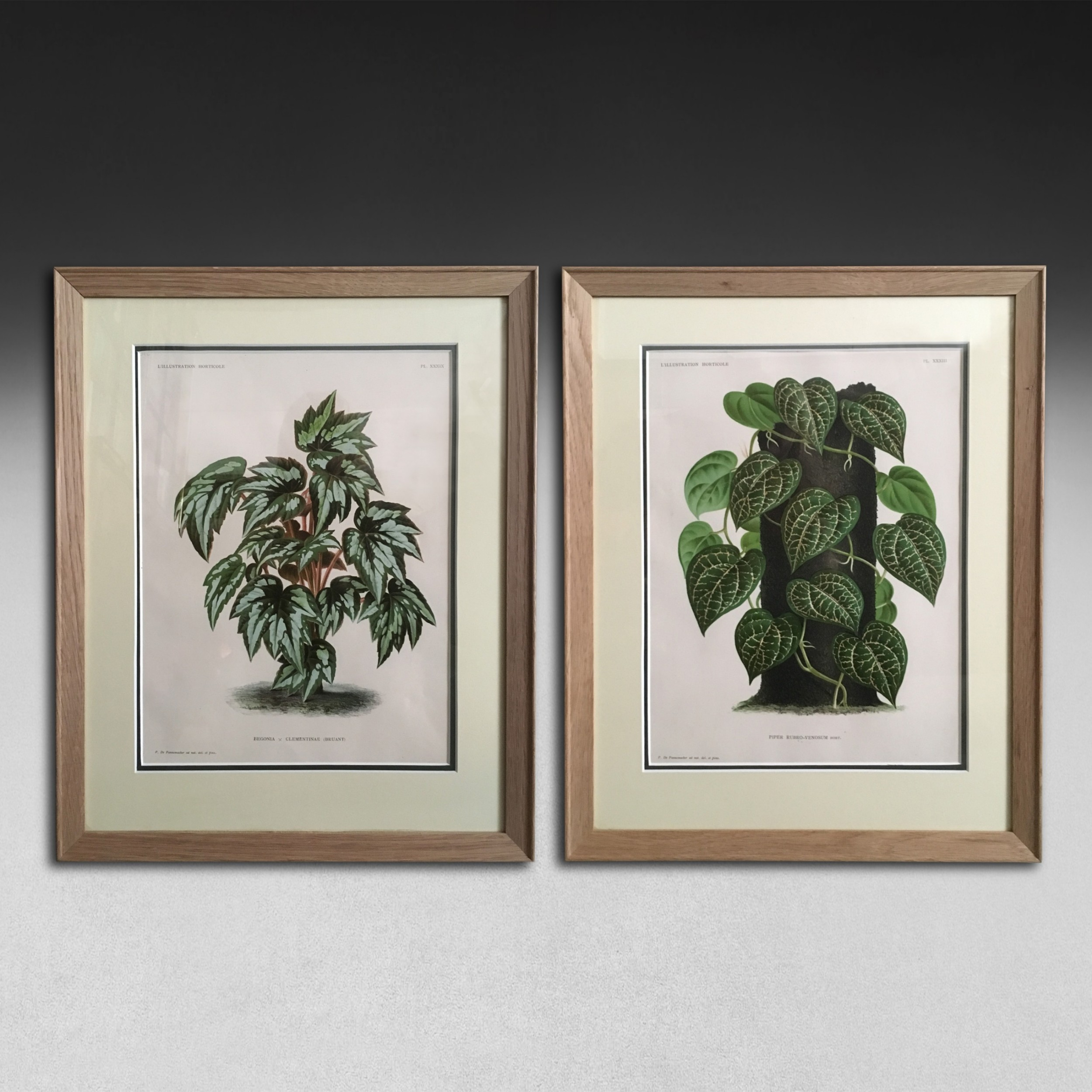 a pair of foliage botanical engravings from lillustration horticol